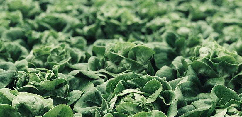 fenmarc-produce