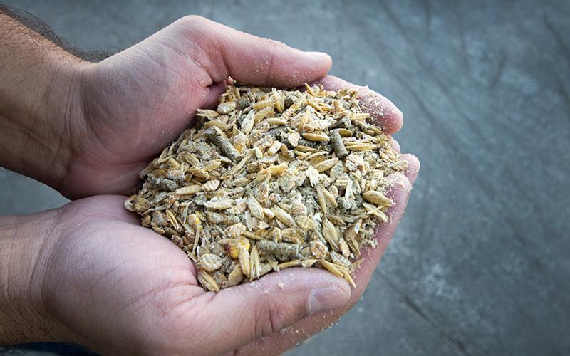 animal-feed-resized